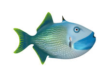 3D Rendering Trigger Fish on White Stock Photos