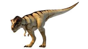 Tyrannosaurus-rex 3D. 3D rendering of tyrannosaurus-rex on white background Stock Photos