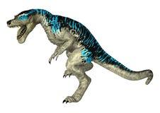 3D Rendering Tyrannosaurus Rex on White. 3D rendering of a dinosaur Tyrannosaurus Rex   on white background Royalty Free Stock Photos