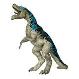 3D Rendering Tyrannosaurus Rex on White Royalty Free Stock Photography