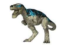3D Rendering Tyrannosaurus Rex on White Stock Images