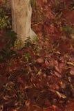 3d rendering zakrywający z liśćmi w jesień sezonie ziemia ilustracji