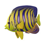 3D renderingu Angelfish na bielu Obrazy Royalty Free