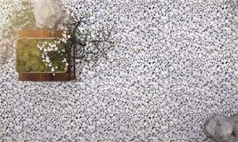 3d renderingu bonsai tło w japońskim zen ogródzie z tradycyjnego stylu wystrojem Zdjęcie Stock