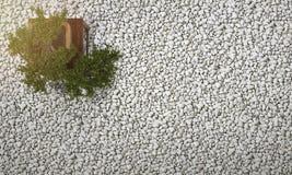 3d renderingu bonsai w japońskim zen uprawiają ogródek z żwirem i otoczakiem na tle Fotografia Stock