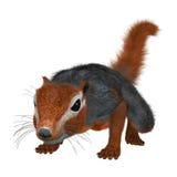 3D renderingu Bush Czerwona wiewiórka na bielu Obrazy Royalty Free