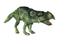 3D renderingu dinosaur Protoceratops na bielu Fotografia Royalty Free