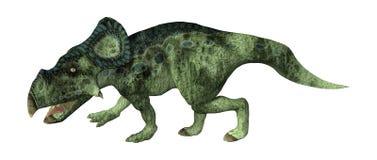 3D renderingu dinosaur Protoceratops na bielu Zdjęcie Stock