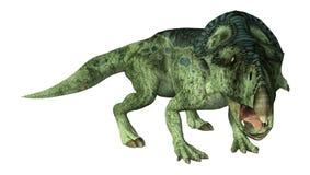 3D renderingu dinosaur Protoceratops na bielu Obrazy Royalty Free