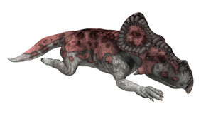 3D renderingu dinosaur Protoceratops na bielu Zdjęcia Royalty Free