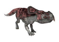 3D renderingu dinosaur Protoceratops na bielu Obrazy Stock