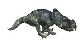 3D renderingu dinosaur Protoceratops na bielu Obraz Stock