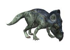 3D renderingu dinosaur Protoceratops na bielu Obraz Royalty Free