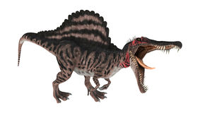 3D renderingu dinosaur Spinosaurus na bielu Obraz Royalty Free