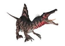3D renderingu dinosaur Spinosaurus na bielu Fotografia Royalty Free