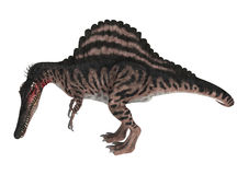 3D renderingu dinosaur Spinosaurus na bielu Zdjęcia Royalty Free