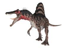 3D renderingu dinosaur Spinosaurus na bielu Zdjęcia Stock