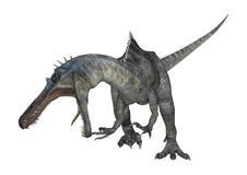 3D renderingu dinosaur Suchomimus na bielu Zdjęcie Royalty Free
