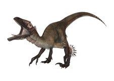 3D renderingu dinosaur Utahraptor na bielu Fotografia Stock