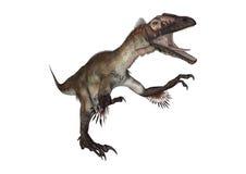3D renderingu dinosaur Utahraptor na bielu Obrazy Royalty Free