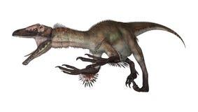 3D renderingu dinosaur Utahraptor na bielu Zdjęcia Royalty Free