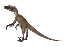 3D renderingu dinosaur Utahraptor na bielu Zdjęcie Stock