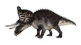 3D renderingu dinosaur Zuniceratops na bielu ilustracji