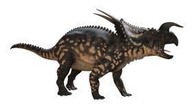 3D renderingu dinosaura Einiosaurus na bielu Zdjęcie Stock