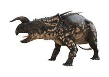 3D renderingu dinosaura Einiosaurus na bielu Obraz Stock