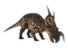 3D renderingu dinosaura Einiosaurus na bielu Zdjęcie Royalty Free