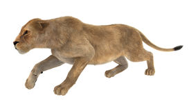 3D renderingu Żeński lew na bielu Obraz Stock