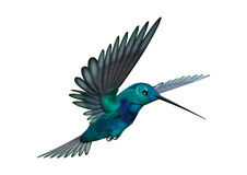 3D renderingu Hummingbird na bielu Obraz Stock