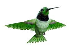 3D renderingu Hummingbird na bielu Obraz Royalty Free