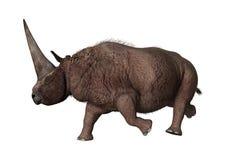 3D renderingu nosorożec Elasmotherium na bielu Zdjęcia Stock