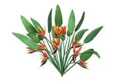 3D renderingu Strelitzia roślina na bielu zdjęcia royalty free
