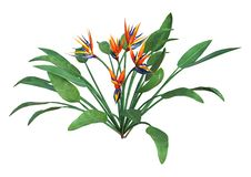 3D renderingu Strelitzia roślina na bielu obrazy royalty free