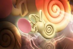 3d rendeu a cóclea da orelha interna no fundo da cor ilustração do vetor