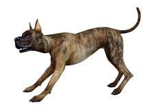 3D rendição Grat Dane Dog rajado no branco ilustração stock