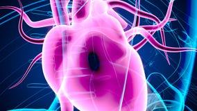 3d a rendu l'illustration d'anatomie des organes humains illustration libre de droits