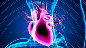3d a rendu l'illustration d'anatomie des organes humains illustration de vecteur