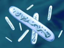 3D a rendu l'illustration des bactéries d'un lactobacille Photographie stock libre de droits