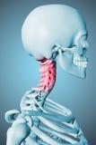 3d a rendu le mâle d'illustration squelettique Photos libres de droits
