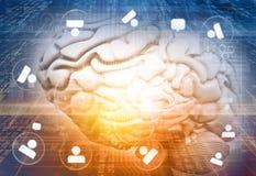 3d rinden de funciones del cerebro libre illustration