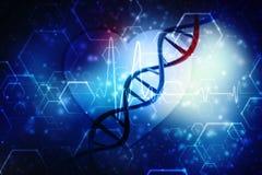 3d rinden de la estructura de la DNA en fondo médico de la tecnología Fotos de archivo libres de regalías