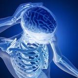3D rinden de una figura médica con el cerebro destacado Fotografía de archivo