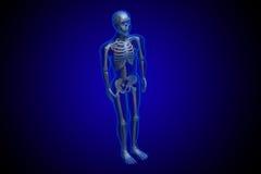3d rindió el esqueleto Imagenes de archivo
