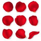 3d rouge détaillé réaliste Rose Petals Set Vecteur Photo libre de droits