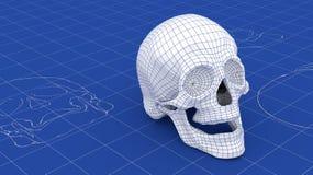 3D Schedel Mesh Blueprint Stock Afbeeldingen