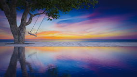 3d sea view rope swing under the tree. 3d rendering image of rope swing under the tree placed on timber deck and swimming pool which have sunset sky and sea as stock footage
