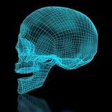 3D siatki czaszka Zdjęcie Royalty Free